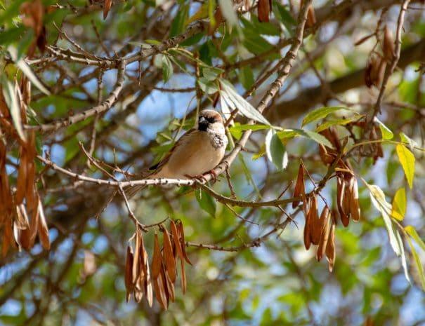 Garden birdlife